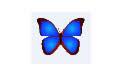 bkViewer(数码照片浏览工具) v5.1e 绿色免费版