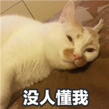 油牌猫表情包无水印完整版_wishdown.com