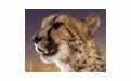 非洲野生动物幻灯片主题壁纸 官方版