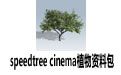 speedtree cinema植物资料包 v7.0.5 完整版