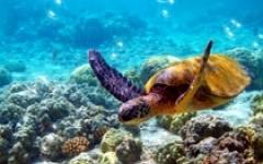海底世界水龟屏幕保护