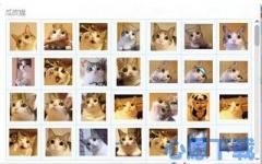 瓜皮猫gif表情包 1.0 官方版