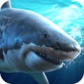 真實模擬鯊魚捕食 v1.0.3.0322 安卓版