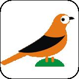 礼貌鸟康复 v1.0.2