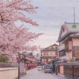 2019唯美好看的樱花图片大全