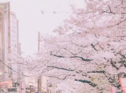 抖音张嘴吹出樱花雨特效拍摄教程