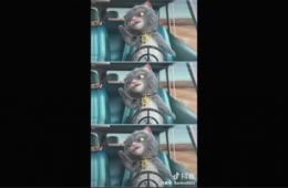 抖音斑布猫视频合拍教程