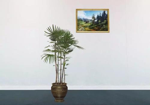 《明日之后》新家具铁树盆栽图文展示