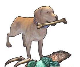 明日之后宠物狗有哪些性格?_wishdown.com