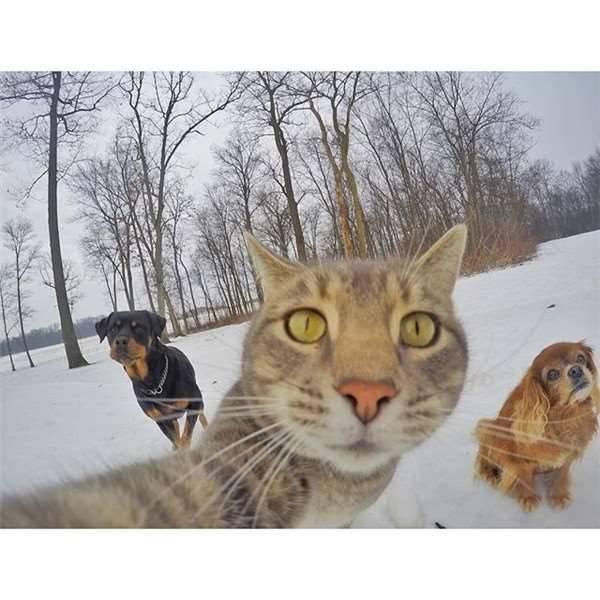 抖音猫咪自拍表情包大全图片