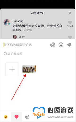 抖音评论怎么发五只小猫咪动图_wishdown.com