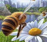 模拟蜜蜂 V1.0 安卓版