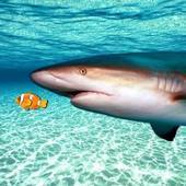 真正的鲨鱼模拟器 v1.1 安卓版