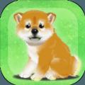 养育柴犬的治愈 v1.0 安卓版