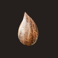 种子模拟器 安卓版